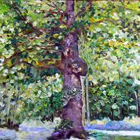 obraz drzewa w lesie